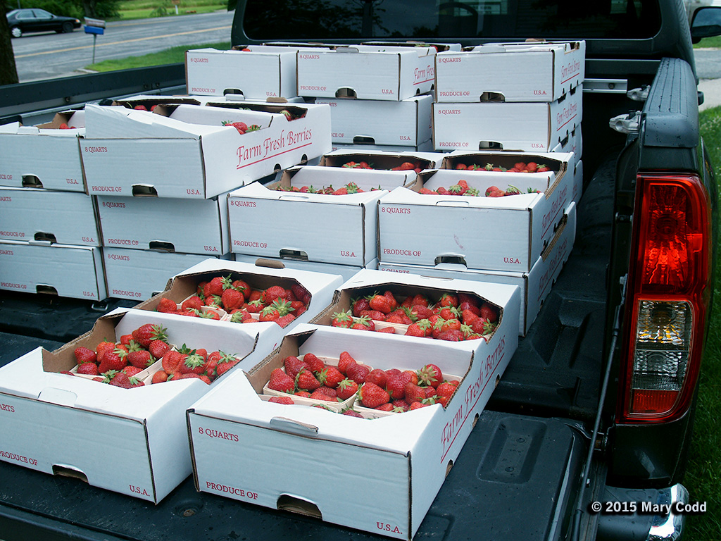 Truckload of Strawberries #2